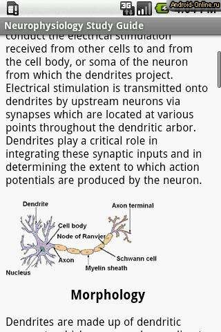 neurophysiology study guide Als 2304, exam study guide: neurophysiology and the nervous system als, exam, animal anatomy, physiology, anatomy  virginia tech - aged 2304 - study guide.